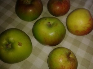 Bramleys and windfalls: a taste of autumn